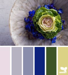 Find complimentary colors from one seed color. Awesome for room design inspiration!