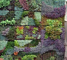 wall gardens can add such interest to a garden. Succulent mural - gorgeous!