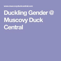 Duckling Gender @ Muscovy Duck Central