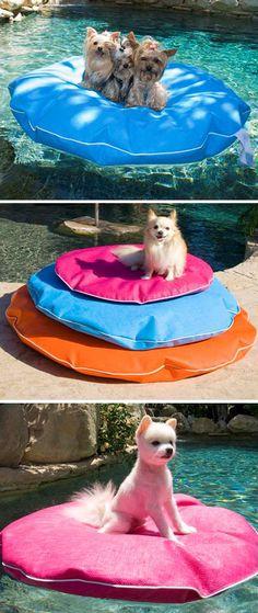 Doggie pool float