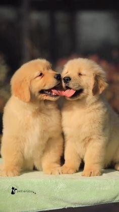 Super Cute Puppies, Cute Baby Dogs, Cute Little Puppies, Cute Funny Dogs, Cute Dogs And Puppies, Cute Little Animals, Cute Cats, Funny Animal Videos, Funny Animals