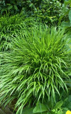 Laurent Perrier Garden designed by Tom Stuart-Smith for the Chelsea Flower Show 2010 Plants, Sutton Seeds, Shade Garden, Ornamental Grasses, Urban Garden, Evergreen Plants, Grass, Planting Plan, Cottage Garden Plants