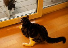 More safe ideas for keeping the neighborhood kitties out of the yard.