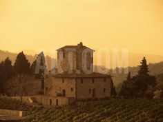 Farms and Vines, Tuscany, Italy Photographic Print by J Lightfoot at Art.com
