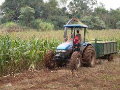 Uma das atividades para a qual se utiliza o trator, juntamente com a ensiladeira, é a produção de silagem, que serve de alimento para os animais da propriedade.