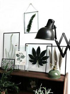 Interior musthave: Transparante fotolijsten met bladeren en veertjes   NSMBL.nl