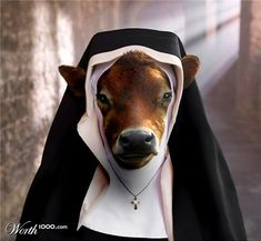 Holy Cow!!!