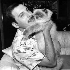 Freddie Mercury was a British singer-songwriter and producer. As the frontman of Queen, Freddie Mercury was one of the most tale. Queen Freddie Mercury, Cute Kittens, Cats And Kittens, Siamese Cats, Celebrities With Cats, Celebs, Crazy Cat Lady, Crazy Cats, I Love Cats
