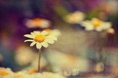 Hey, I found this really awesome Etsy listing at https://www.etsy.com/listing/181744335/buttercup-daisies-photograph-fine-art
