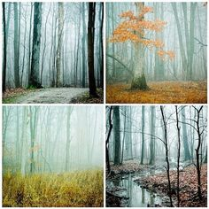 Woodland Art Photograph set . Fog series . nature by joystclaire