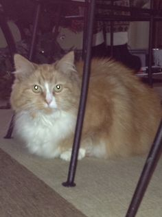 Pumpkin, as she's hiding under the dining room table.