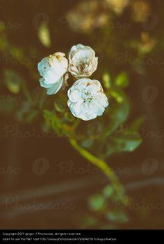 Foto 'Morbide Schönheit' von 'ginger.'