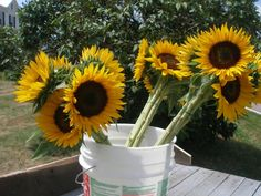 How to Plant & Grow Cut Sunflowers to Sell. Don't know who I'd sell them to but I'd love to grow some