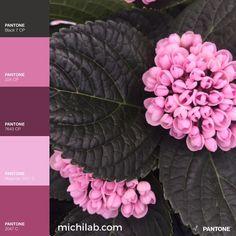 April is pink, la natura è la mia più grande fonte di ispirazione!