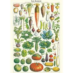 FRENCH VEGETABLE MARKETS