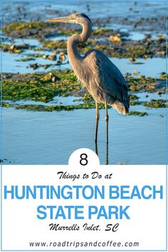 Huntington Beach State Park is one of the best parks in South Carolina. This coastal state park has two nice campgrounds with full hookups, hiking trails, opportunities for swimming and fishing, and the surprising Atalaya Castle to explore. But my favorite feature of the park is the amazing and diverse wildlife. #travel #southcarolina #statepark #hiking #fishing #camping #thingstodo