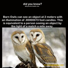 1000+ images about Owls on Pinterest | Barn owls, Owl ...