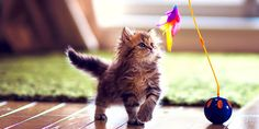 Make Your New Cat Feel At Home. Prepare Your #Home For Your New #Kitten In Simple #Ways -