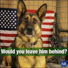 "The Pentagon considers military dogs ""equipment"" and can be left behind when the troops come home."