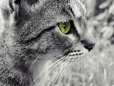 my cute cat <3