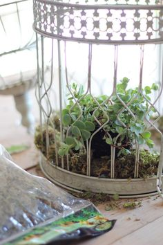 How to plant succulents in a birdcage – Craftberry Bush - Modern