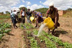 Patricia Mhike, Gladys Ngwenya and Blessing Shayanewako (left to right) from the Chaitemura Chavakuseva group watering their field in the E Africa farming school, Wedza, Zimbabwe. (2011, Photo © Jon Macpherson/ Progressio)