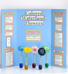 Pick up a science experiment kit for your child, then display their findings on one of our sturdy project boards.