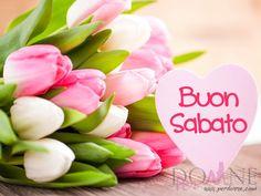 buon sabato immagine con frase aforisma tulipani fiori rosa bianchi cuore.jpg