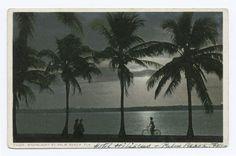 Moonlight at Palm Beach, Palm Beach, Fla.