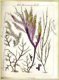 seaweed - Google Search