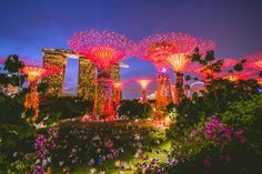 Singapore, the garden city, is a beautiful city unlike any other we have been in Asia. This tiny, island, city-state feels more like being in a big city in the ... Read More