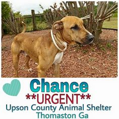 Thomaston GA - Shelter Animals Need People - Please Support Your Shelter Animals Any Way You Can - Volunteer with Rescue and Start a Fostering Group to Save and Help to Adoptions ♥ Thaston Ga. ~ Meet Chance, he was DUMPED by his owner, Chance is great with other dogs, he is in need of a adopter or immediate rescue. http://www.adoptapet.com/pet/12943920-thomaston-georgia-labrador-retriever-mix You do not have to live in Ga to save. Transports can often be arranged!..