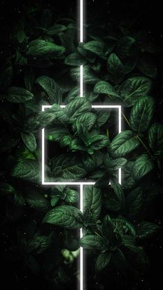 Neon Foliage Green Plants - IPhone Wallpapers