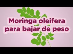Youtube, Moringa Oleifera, Herbs, Get Lean, Loosing Weight, Side Effects, Medicinal Plants, Proverbs, Get A Life