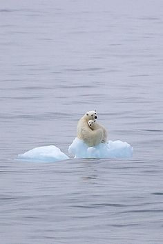 Where did the ice go? #wild | http://awesome-wild-animal-collections.blogspot.com