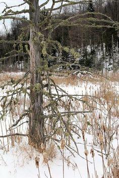 Andrew Wyeth - Dead of Winter