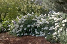 Easy Does It: Best Hydrangeas for Beginners to Grow