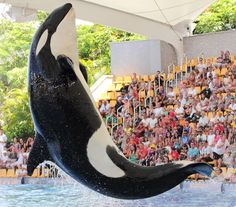 Tenerife's top five attractions - Loro Parque http://www.azureholidays.com/Article.aspx?ArticleID=801450178