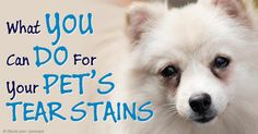 Tear staining in dogs and cats is typically caused by excessive tear production, though it can also be a sign of a serious eye-related disease. http://healthypets.mercola.com/sites/healthypets/archive/2014/11/12/pet-tear-staining.aspx