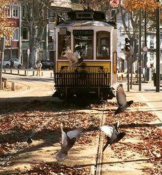 Momentos mágicos durante el paseo en tranvía. Verdaderamente Oporto encanta! #visitporto #followoporto #iieebb #oporto #inspiration #nature #travel #oportoencanta #nosnatrip #amigasviajantes #visitportugal #instragram #instagramersgallery #barcelonaemociona @maechegamos @maequeviaja @destinosmaravilhososbyeli #naprodavida by barcelonaemociona