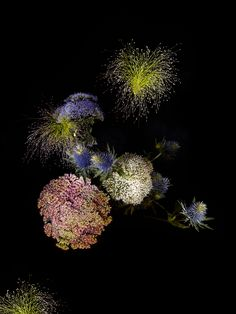 How to Turn Flowers Into Fireworks, Without Making Them Explode | Flowerworks 1, Carduus, Sedum spectabile, Panicum capillare   Sarah Illenberger  | WIRED.com
