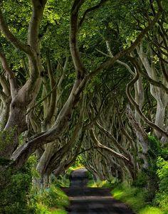"""bluepueblo: """" The Dark Hedges, Northern, Ireland photo via nonna """""""