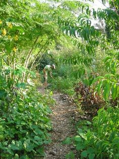 Harvest More & Garden Less with Permaculture! Learning these basic back-to-nature techniques make gardening effortless, abundant and healthy.
