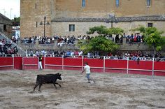 Santacara: Vacas de Santos Zapatería - Jonatan Corredera Dolores Park, Travel, Saints, Cows, Viajes, Destinations, Traveling, Trips