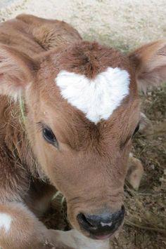 hey I'm Audrey // I like small flowers and happy animals Baby Farm Animals, Baby Cows, Baby Animals Pictures, Cute Little Animals, Cute Animal Pictures, Cute Funny Animals, Animals And Pets, Baby Elephants, Wild Animals