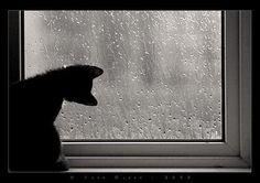 Bendición Celta. Lluvia (extracto)