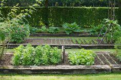Planches de légumes dans le potager