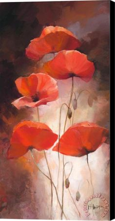 willem haenraets on canvas | willem haenraets Poppy Bouquet Ii Stretched Canvas Print / Canvas Art ...