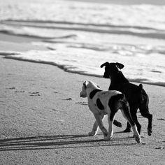 best friends by Christian Müller