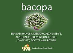 Learn the health benefits of Bacopa. Bacopa is a powerful herb for the mind and is a memory enhancer. www.meditationinspires.com  #mindfullness #brahmi #guru #yoga #yogi #ayurveda #ashtanga #meditation #namaste #stress #headache #memorybooster #naturalhomeremedies #bacopabenefits